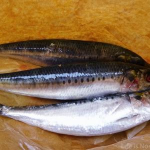 Iwashi, Sardine, Sashimi