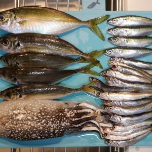 大黒海釣り施設でアジ&シリヤケイカ&小サバ&イワシ
