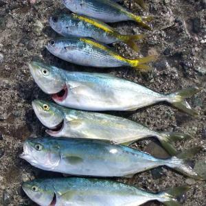 熱海港でワカシ&タカベ釣り