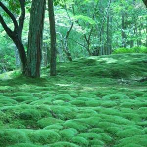 今川家の全盛期を築いた太原 雪斎とは 2020年NHK大河ドラマ「麒麟が来る」