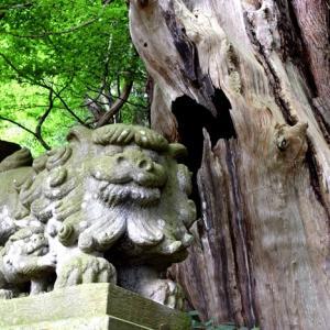明智光秀 岐阜でゆかりの地はどこ? 2020年NHK大河ドラマ「麒麟がくる」Ⅳ