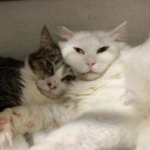 抱っこできない猫の爪切り