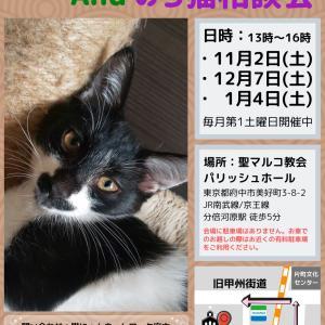地域猫対策セミナーと多摩川河川敷の猫達