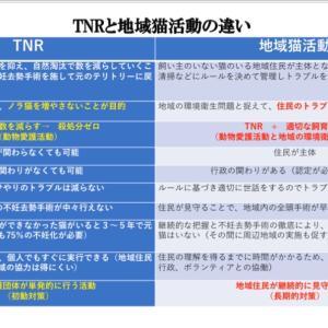 TNR活動と地域猫活動の違い