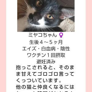 【里親募集】ミヤコちゃん