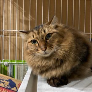 【里親募集】多摩川猫のポコちゃんのこと。