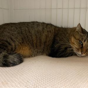 多摩川河川敷の猫2