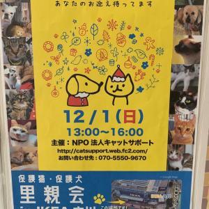立川IKEAの譲渡会に参加します〜
