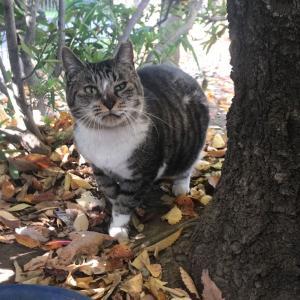 地域猫の、あんこちゃんのこと《ご支援のお願い》