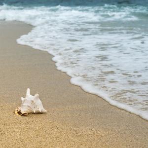 ブログを書く~心の波に揺られて~