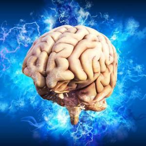 自分の脳がわかっていない脳科学者っているのね