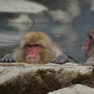アンパンチを封じられたら、お風呂にゆっくり入れない【雑記】