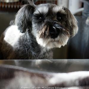 犬洗い日和です?!