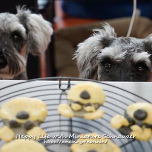 犬用ケーキーと犬用クッキーと