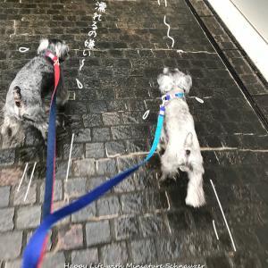 雨に降られて大急ぎ