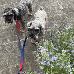 犬も植物も春への準備です