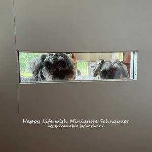 犬目線の覗き窓
