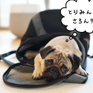 金ちゃん犬生初のトリミングサロンへ行く!