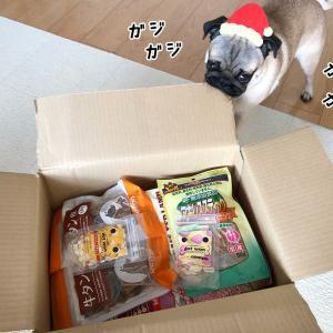 金ちゃんのクリスマスプレゼント