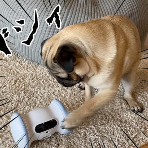 人工知能ロボット VS 金ちゃん