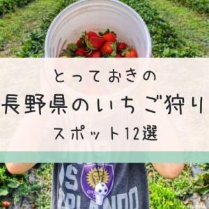 長野県のいちご狩りスポット12選!2021年の時期や期間・予約の有無は?