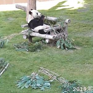 竹のバイキング