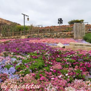 昨年2019年4月27日のザンビ花壇のお花たち