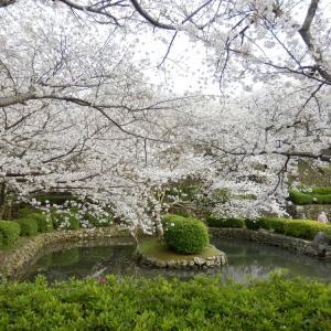 花見 -旧円融寺庭園-