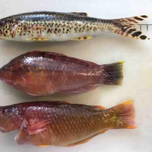 さかな求めて、外道 4魚種 ➕ 目標 1魚種