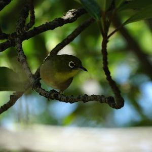 渡りの季節・大阪城で鳥撮~