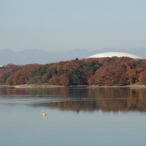 多摩湖ランから野川でした・・