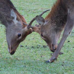 奈良公園で鹿と遊んで大阪へ~