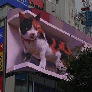 新宿にて・3D巨大猫を見て「中嶋」でランチ