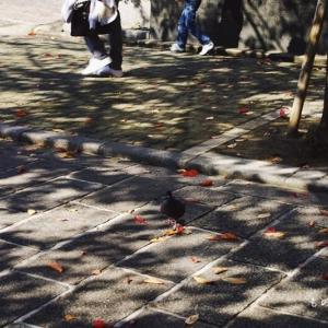 落 葉 の 道