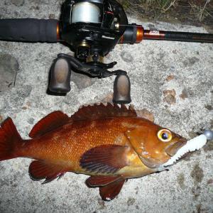 そうだ!夜釣りにいこう♪