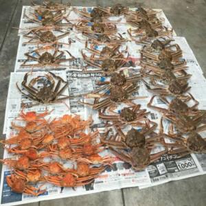 松葉蟹のセリに参加? いえいえそうではありません。