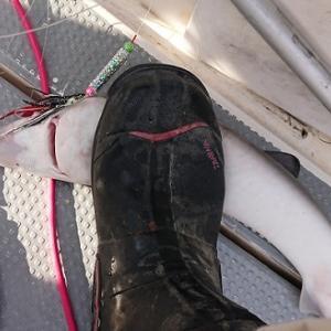 鮭釣りのシーズンです