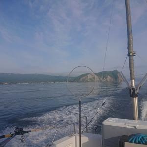 日本海ヒラメ