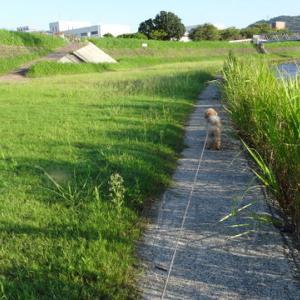 9月15日の散歩です。