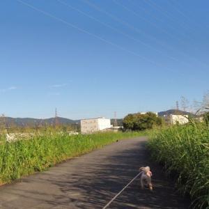 9月25日の朝散歩です。