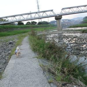 9月26日の夕方散歩です。