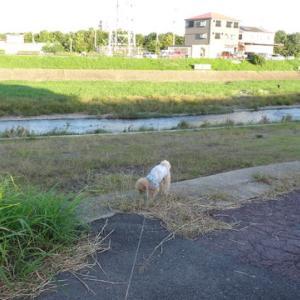 10月9日の夕方散歩です。