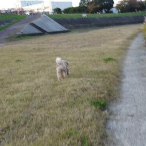9日の夕方散歩です。