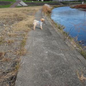12月4日の朝散歩です。