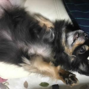 愛犬が私の天使