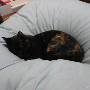 これから我が家の愛猫「ヒメ」の病気(肥大型心筋症)やその経過などについて書いていきます