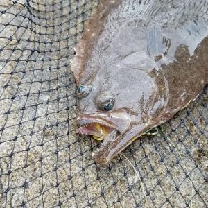 9月のヒラメ釣り in 岡山 日中デイゲームでヒラメを狙う