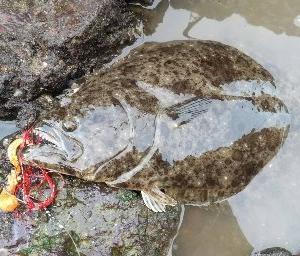 ヒラメ釣り【オフセット単品で釣る意味】