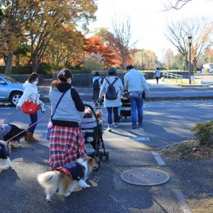 昭和記念公園で遊びました