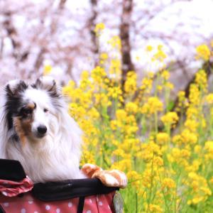 森林公園で花見散歩